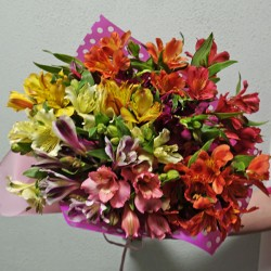 Bouquet of Alstroemeria 15 branches