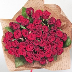 51 red rose of medium height
