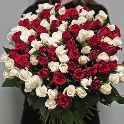 101 rose mix red and white