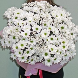 A large bouquet of Summer daisies